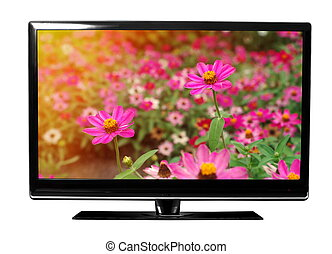 tv with flowers - tv with the flowers on white