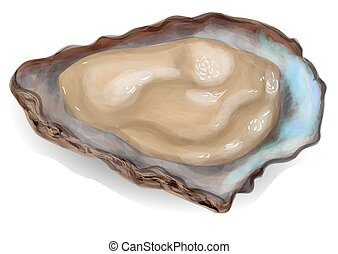 oyster on a white background 10 EPS