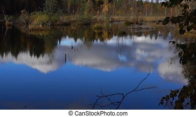 Vivid swamp in wild taiga tilt up - Vivid swamp in wild...