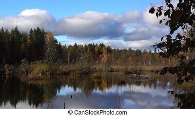 Nice swamp in autumn - Vivid swamp in wild taiga of Karelia...