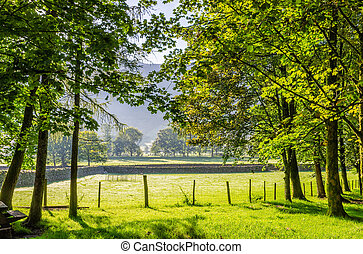 Backlit rural English scene - Trees and fields in Northern...