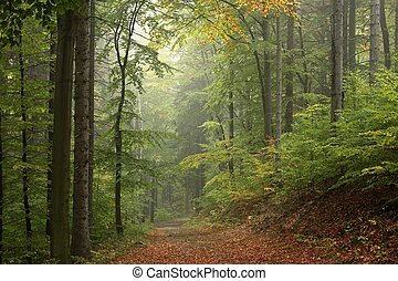 Path through the enchanted forest - Path through the...