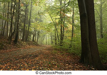Forest path in early autumn - Forest path in misty weather...