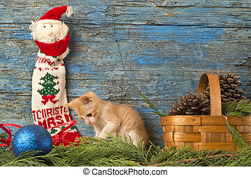 Funny cat greeting Christmas