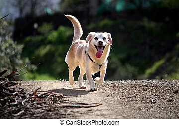 Domestic dog on the nature - View of an domestic dog running...