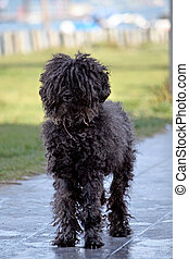 Black domestic dog - View of an adorable small black...