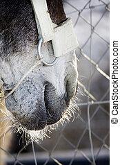 Donkey mouth
