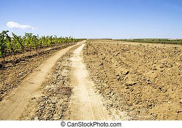 Road  in Plowed field