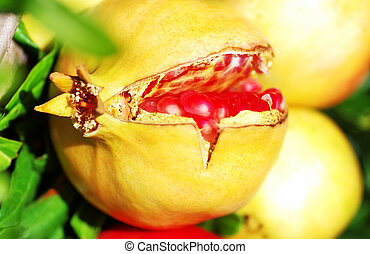 ripe pomegranate on branch of tree