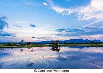 Sunset over wild lake after rain, chiangrai, Thailand