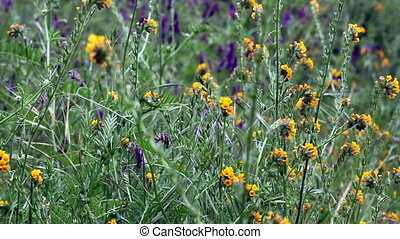 Yellow And Purple Wild Flowers Movi