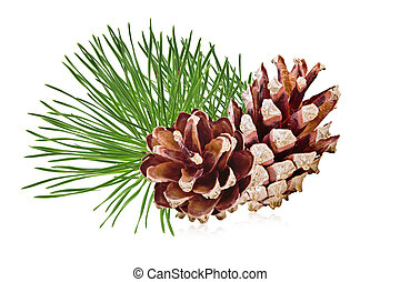 Pine cones and pine branches on a white background