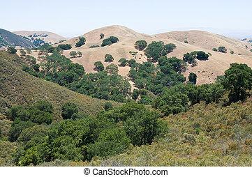 Mt. Diablo view