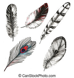 Set of drawings feathers