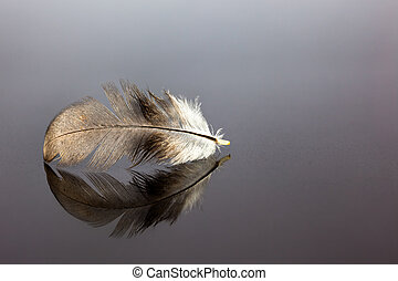 bird feather - An bird feather whit reflection on an black...