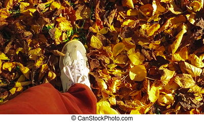 POV shot walk autumn foliage. Walking in Autumn Forest. Legs...