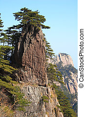 Huangshan - Pine trees growing on a crag in Huangshan...