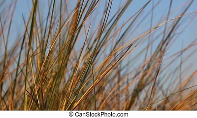 The grass moving in the wind - Closeup view of the grass...