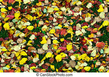 autumn leaves background - seamless pattern of autumn leaves...