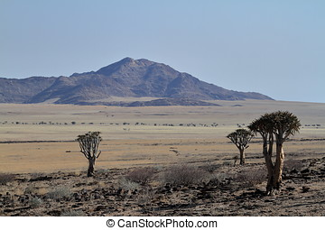 The savanna of Namibia in Africa