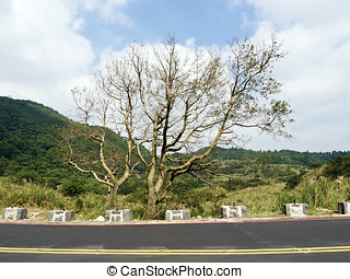 bald tree on winter raod in Yangming mountain