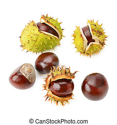 Chestnut fruits isolated on white background