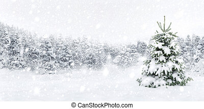 Fir tree in thick snow - Outdoor panorama shot of a young...