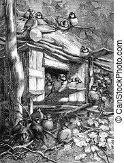 Aluri chickadees (Jura forest), vintage engraving. - Aluri...