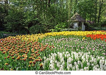 Flower Garden Keukenhof, Amsterdam
