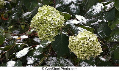 Green flowers with snow 3