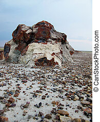 Petrified Wood - A large piece of wood that has been...