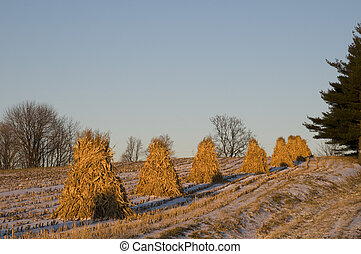 Corn Husk Piles in Amish Country, Ohio.