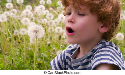 Curly Boy and Dandelions - Funny curly boy sitting on a...