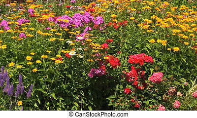 Colourful Flower bed in the garden - Phlox, Veronica,...