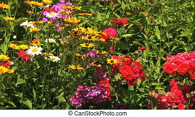 Flower bed in the garden - Zoom out Phlox, Veronica,...