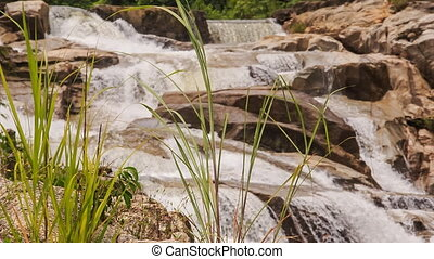 view of stream falls against rocks through plant stalks in...