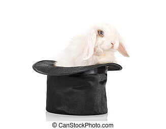 rabbit at black hat - Little rabbit at black hat isolated on...