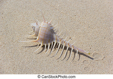 Sea Shell - Sea shell with dangerous thorns on white sand...