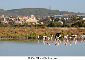 Flamingoes in Sete, France