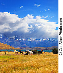 Cliffs Torres del Paine - Beautiful thoroughbred horse...