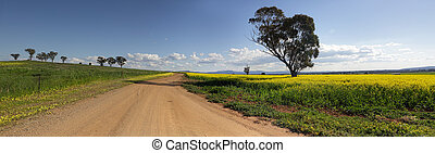On the road less travelled Canowindra Australia - Driving...