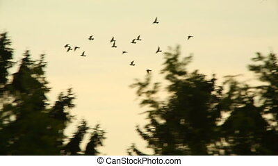 Birds fly by - Many brids in the sky