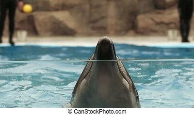 Dolphin performance in pool
