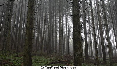 Misty Forest - Pan shot in a misty Forest