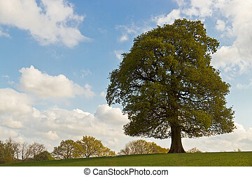 Single tree in a field on sunny spring day