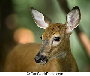 Young Whitetail Deer on Alert in the Woods - Profile of a...