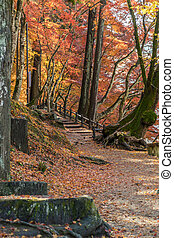 Walkway with Colorful Autumn Leaf