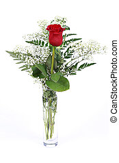 Red Rose in vase Isolated on white