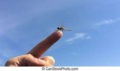 Large dragonfly sat down on the finger