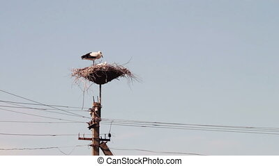 Storks are sitting in a nest on a pillar.